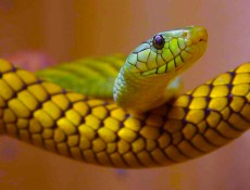 De sueños y serpientes