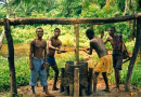 Making_palm_oil,_DR_Congo