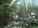 Templo en la Foresta 5 Fotografia de Urzula Paredes