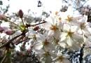 flores humanidad
