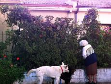 el-jardin-de-Noelia