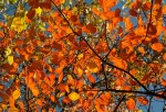 leaves-228104_640