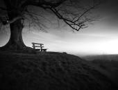 tree-753069_1280