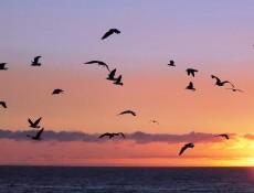 birds-943276_1280
