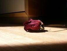 rose-370922_640