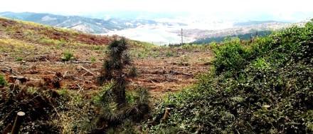 Deforestación Fotografía de Sandra Rojas
