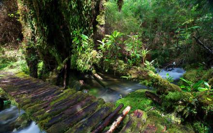 Parque Pumalín 3 Gentileza parquepumalin.cl