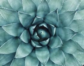 Botanical Garden, photo by Erol Ahmed