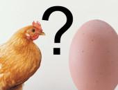 00 huevo-gallina