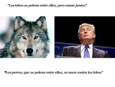 perros-y-lobos-21
