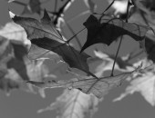 autumn-10484_1280