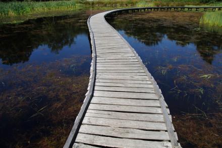 Path of life - choice