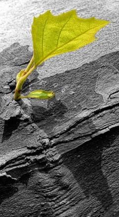 brotes-verdes-tronco-gris