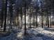 Bosque nevado en Rovaniemi 2017